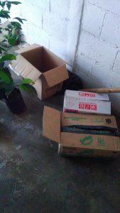 Gardus untuk packing bibit tanaman cangkok