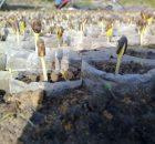 Tanaman menyerap air dalam tanah