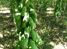prinsip dasar pertanian organik