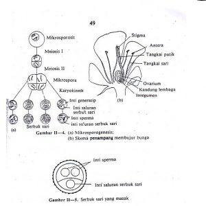 Proses terjadinya mikrosporogenesis pada tumbuhan angiospermae