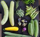 Pengertian dan contoh tanaman hortikultura