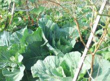 Dampak Negatif Hujan Asam Terhadap Tanaman Pertanian