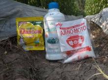 Manfaat Susu Dancow, Micin Ajinomoto, dan Jimmy Hantu untuk Tanaman Cabe