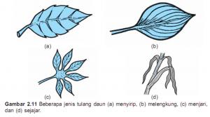 pertulangan daun menyirip, sejajar dan menjari