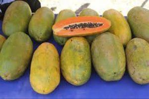 buah pepaya california