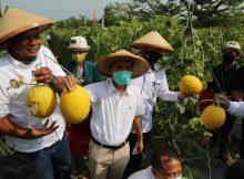 kebun agrowisata melon di Universitas Lampung