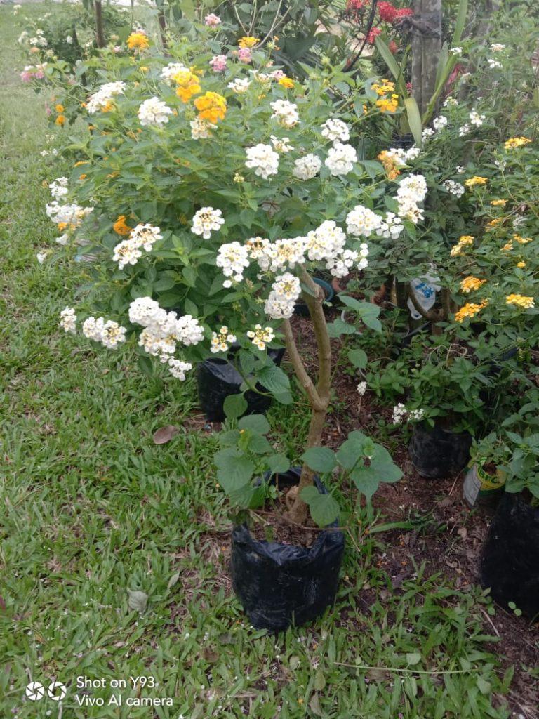 Proses Fisiologis batang tanaman